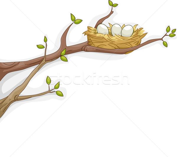 Bird's Nest Stock photo © lenm