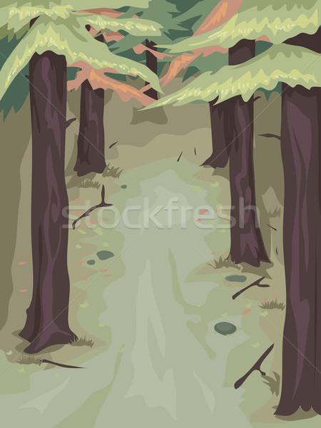 Pine Tree Woods Stock photo © lenm