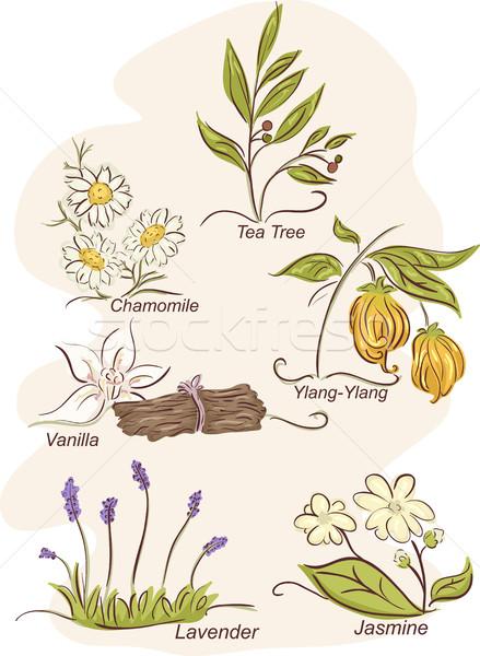 Szárított növénygyűjtemény virágok szett illusztráció különböző növények Stock fotó © lenm