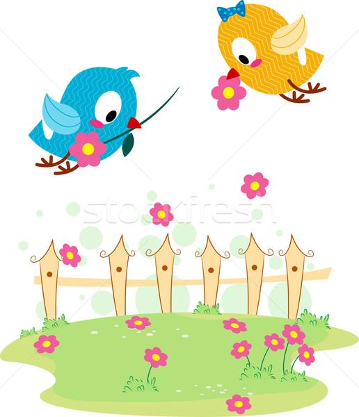 Lovebird Courtship Stock photo © lenm