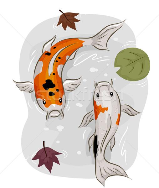 Koi vis water illustratie paar zwembad Stockfoto © lenm