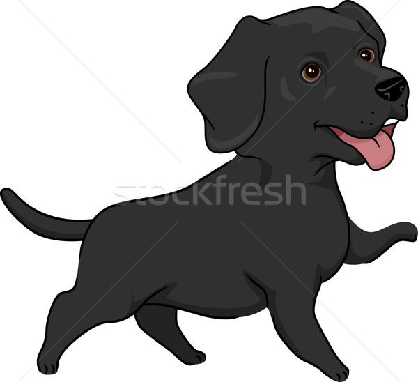 Labrador retriever örnek sevimli siyah köpek Stok fotoğraf © lenm