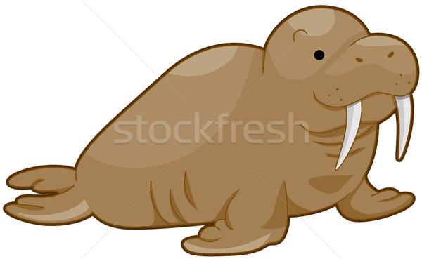 морж право изолированный белый животного Сток-фото © lenm
