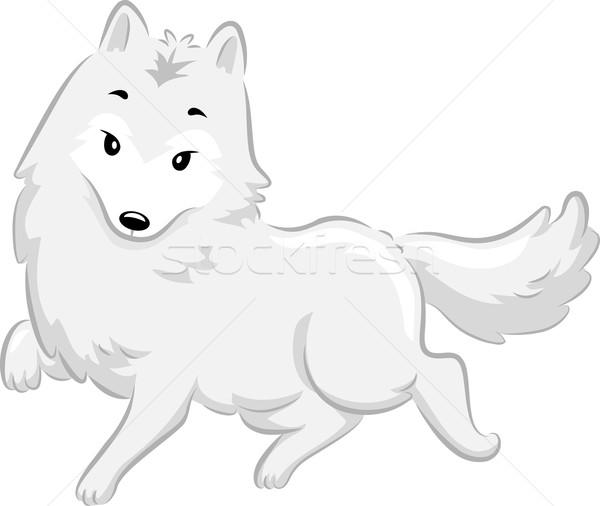 Арктика Fox иллюстрация Cute ходьбе джунгли Сток-фото © lenm