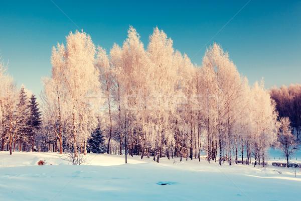 Kış fantastik manzara Ukrayna Avrupa güzellik Stok fotoğraf © Leonidtit