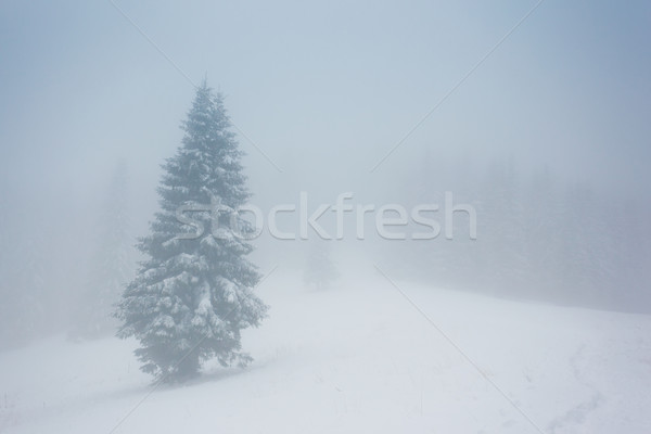 Inverno belo paisagem neve coberto árvores Foto stock © Leonidtit