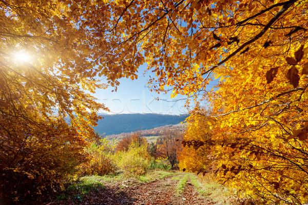 Forêt belle coloré Ukraine Europe Photo stock © Leonidtit