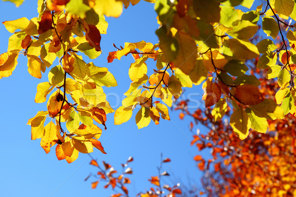 leaves Stock photo © Leonidtit