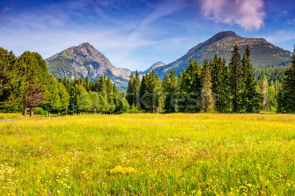 Magie montagne paysage fantastique parc Photo stock © Leonidtit