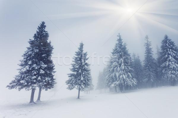 Tél gyönyörű tájkép hó fák fa Stock fotó © Leonidtit