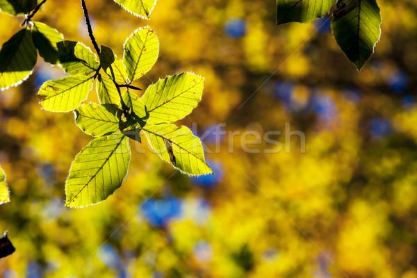 Outono brilhante colorido folhas floresta Foto stock © Leonidtit