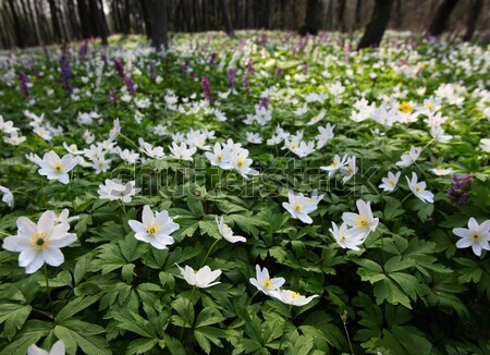 Flor primavera momento belo primavera jardim Foto stock © Leonidtit