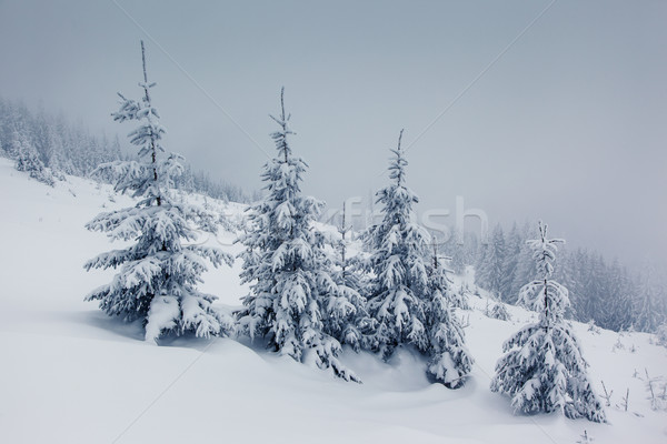 Winter ijzig bergen hemel boom Stockfoto © Leonidtit
