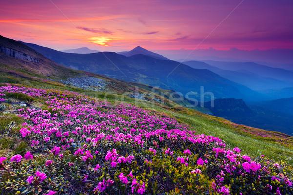 Hegy tájkép mágikus rózsaszín virágok nyár Stock fotó © Leonidtit