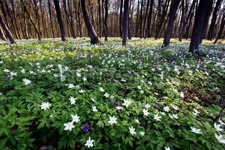 Virág tavasz pillanat gyönyörű tavasz kert Stock fotó © Leonidtit
