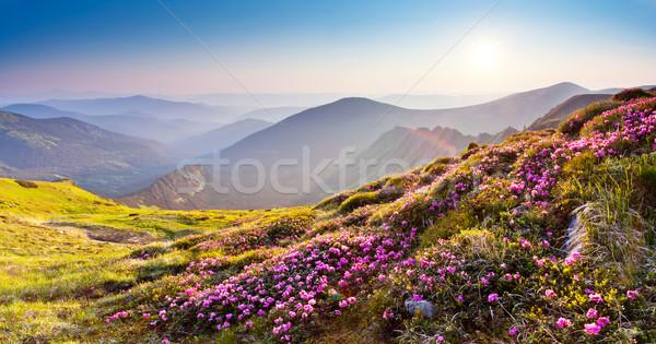 Montagne paysage magie rose fleurs été Photo stock © Leonidtit