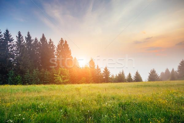 Fantástico verão cena dia fresco Foto stock © Leonidtit