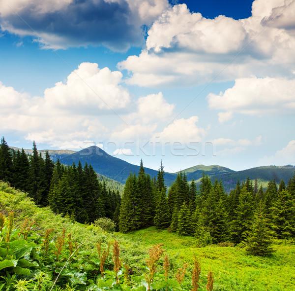 午前 山 風景 ウクライナ ヨーロッパ ストックフォト © Leonidtit