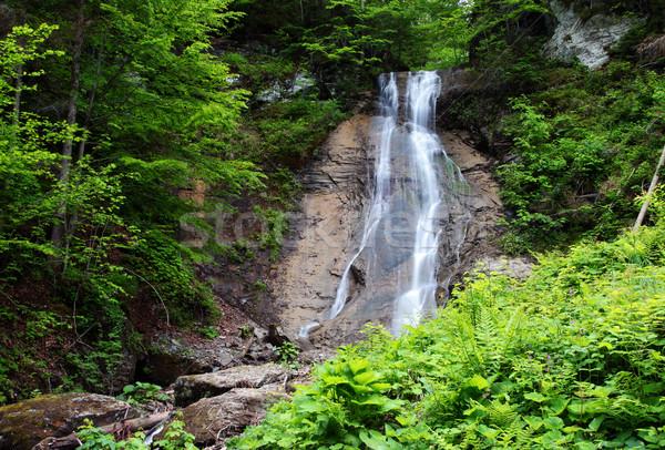 Vízesés nyugalmas díszlet zöld erdő víz Stock fotó © Leonidtit