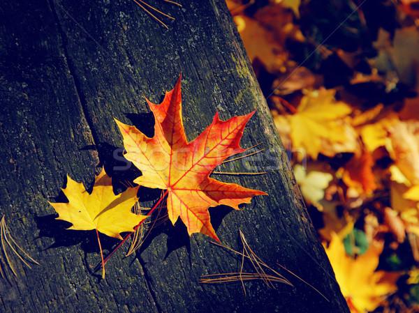 Levelek színes őszi levelek sötét régi fa textúra Stock fotó © Leonidtit