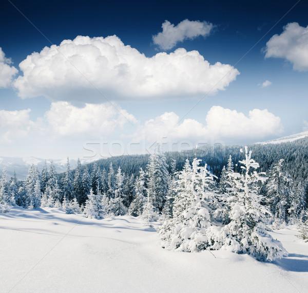 Tél gyönyörű panoráma hó fedett fák Stock fotó © Leonidtit