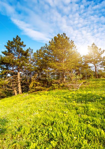 Erdő gyönyörű napos idő hegy tájkép Ukrajna Stock fotó © Leonidtit
