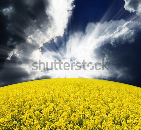 Veld fantastisch groene dramatisch hemel Oekraïne Stockfoto © Leonidtit