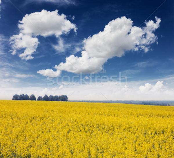 Veld Geel bloemen blauwe hemel wolken Oekraïne Stockfoto © Leonidtit