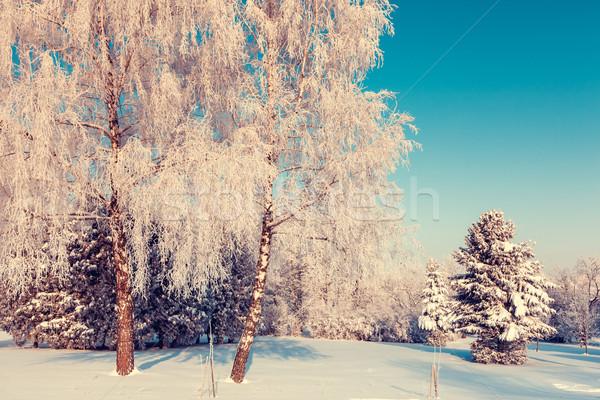 Inverno fantástico paisagem Ucrânia europa beleza Foto stock © Leonidtit