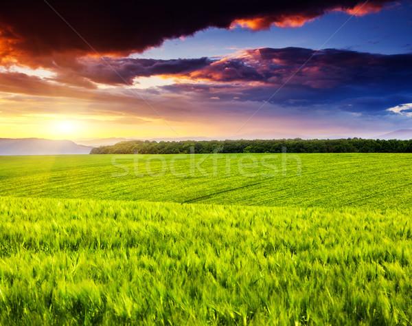закат пейзаж области рассвет небе Сток-фото © Leonidtit
