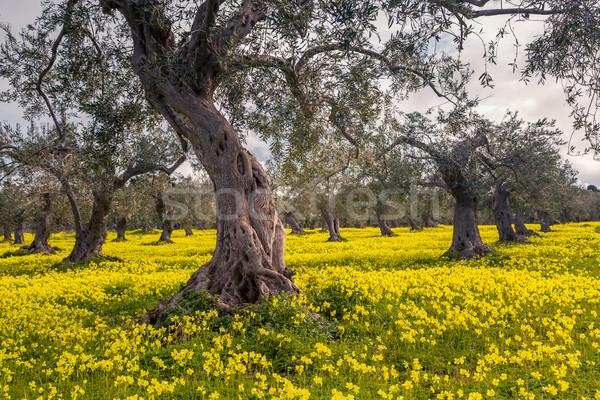 Gyönyörű virágzó kert fantasztikus kék ég mediterrán Stock fotó © Leonidtit