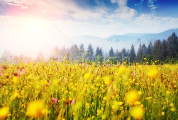 фантастический зеленый холмы Сток-фото © Leonidtit