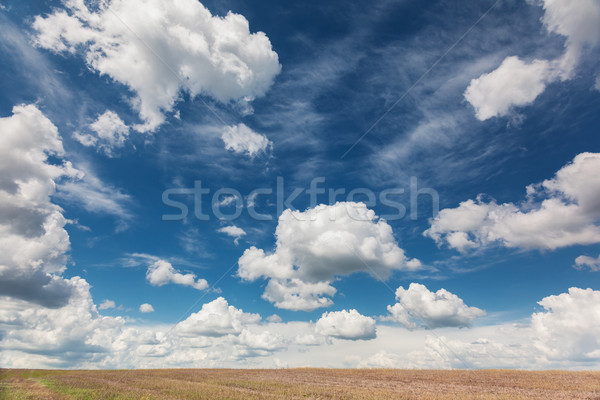 Hemel veld fantastisch blauwe hemel schoonheid wereld Stockfoto © Leonidtit