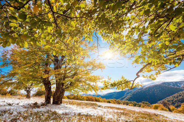 ősz gyönyörű színes őszi levelek erdő Ukrajna Stock fotó © Leonidtit
