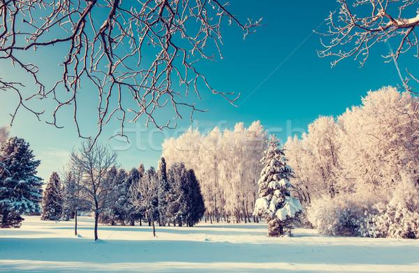 Tél fantasztikus tájkép Ukrajna Európa szépség Stock fotó © Leonidtit
