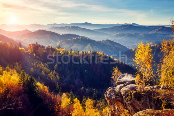 Majestic colorful forest Stock photo © Leonidtit