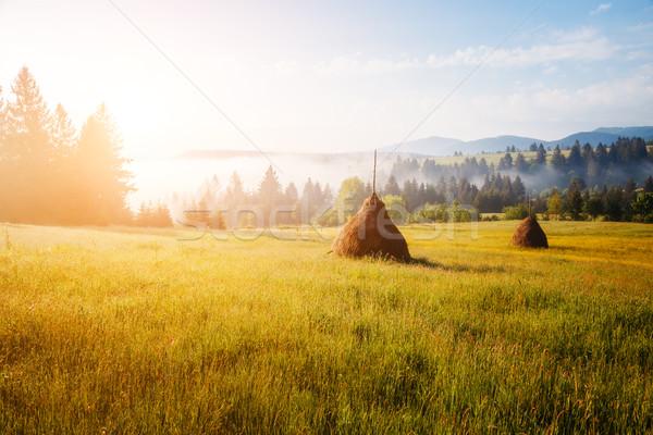 beautiful summer field Stock photo © Leonidtit