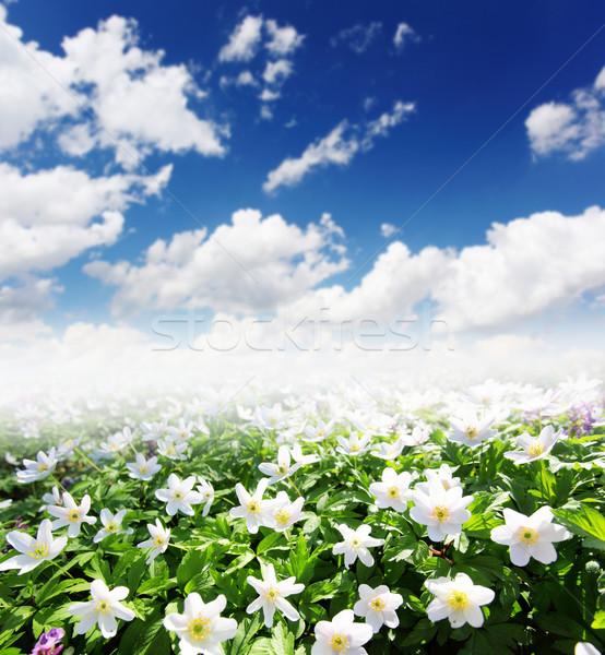 花 春天 時刻 美麗 春天 草 商業照片 © Leonidtit