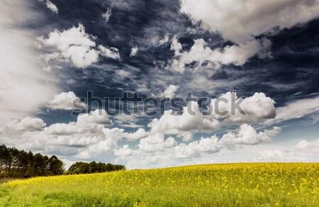 Mező gyönyörű napos idő kék ég égbolt Ukrajna Stock fotó © Leonidtit
