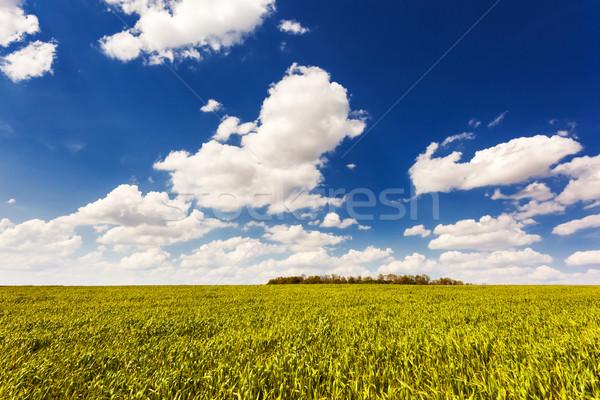 Domaine belle ciel bleu ciel Ukraine Photo stock © Leonidtit