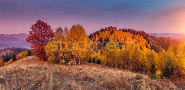 カラフル 森林 ツリー 晴れた 山 ストックフォト © Leonidtit