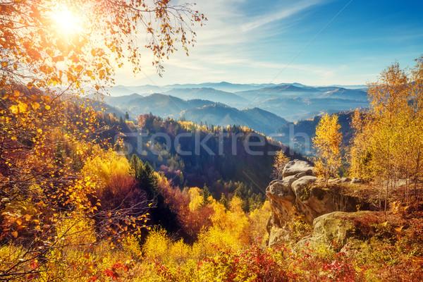 Stock fotó: Fenséges · színes · erdő · fák · napos · hegy