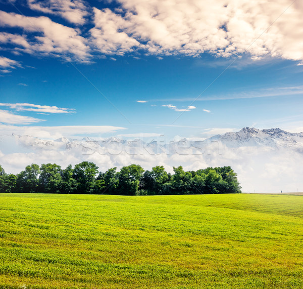 Vidéki gyönyörű napos idő mező kék ég égbolt Stock fotó © Leonidtit