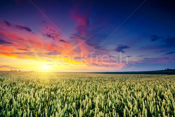 Veld fantastisch zonsondergang kleurrijk hemel Stockfoto © Leonidtit