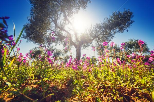 Belle floraison jardin fantastique ciel bleu Photo stock © Leonidtit