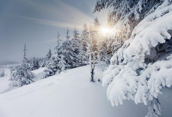 Tél fagyos napos idő hegyek égbolt fa Stock fotó © Leonidtit