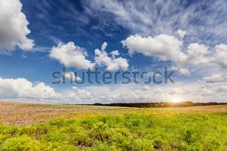 Mező gyönyörű napos idő bolyhos felhők égbolt Stock fotó © Leonidtit
