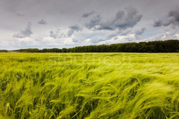 場 奇妙 綠色 戲劇性 天空 烏克蘭 商業照片 © Leonidtit