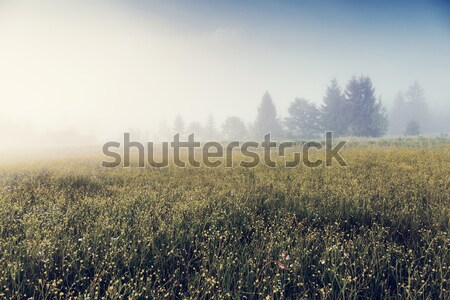 Belo alpino paisagem fantástico dia fresco Foto stock © Leonidtit