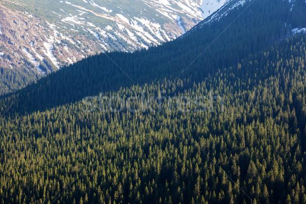 Fantastic sunny day is in mountain landscape. National park Chornogora. Carpathian, Ukraine, Europe. Stock photo © Leonidtit